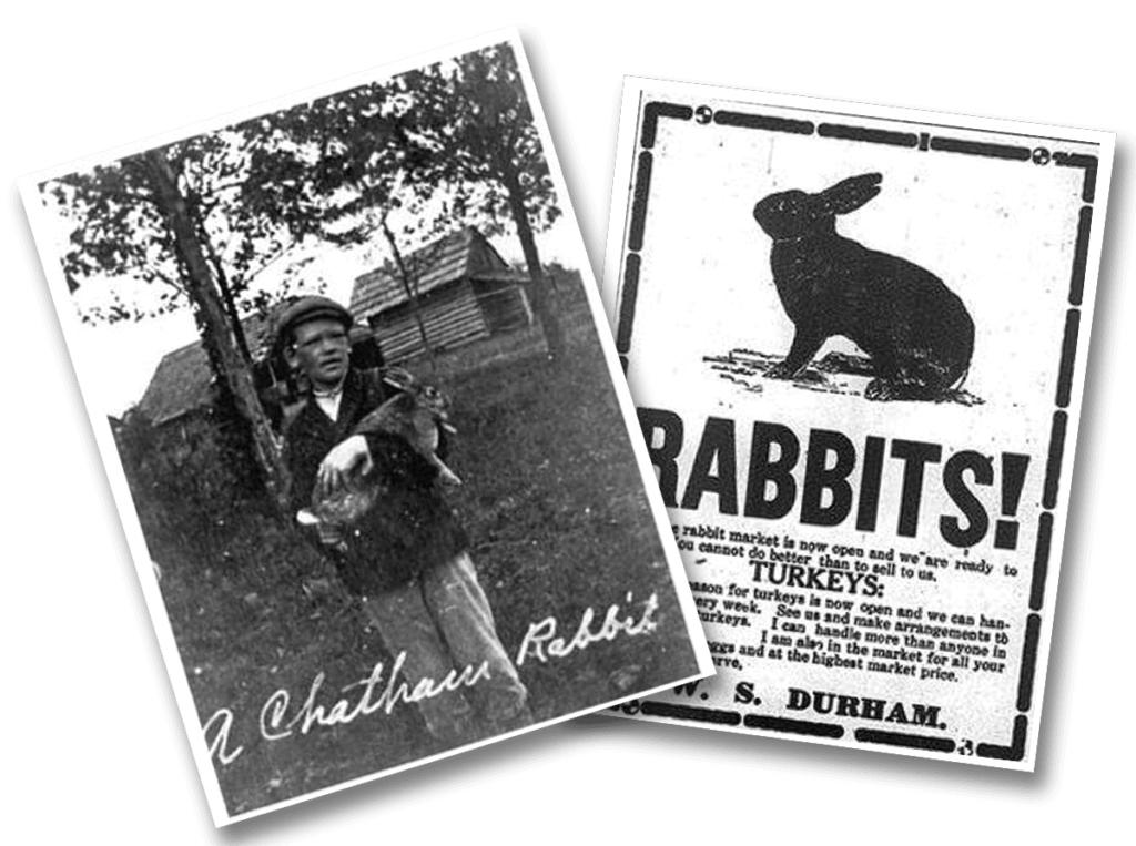 The Chatham Rabbit Old Photos
